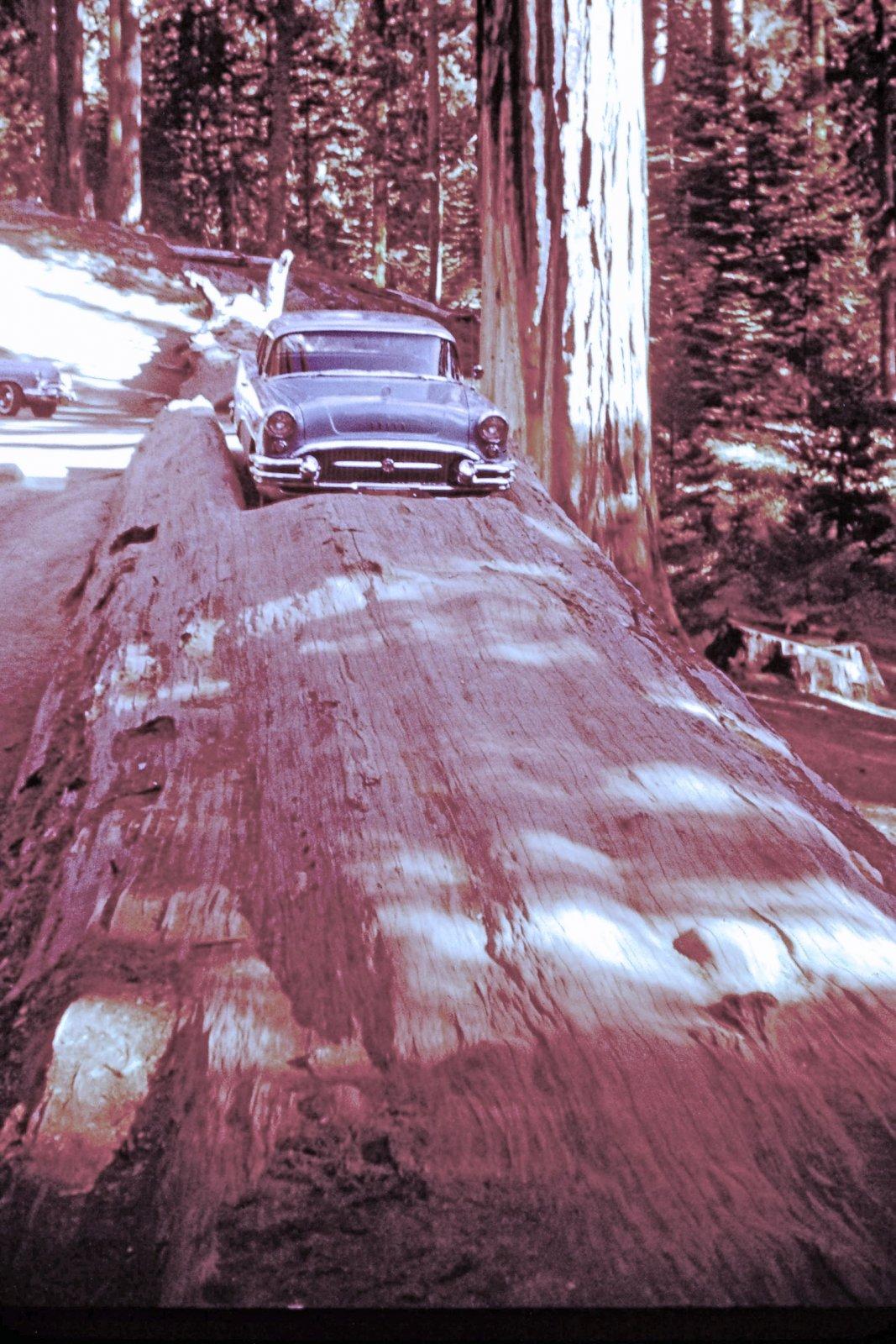 1955 Buick4.jpg