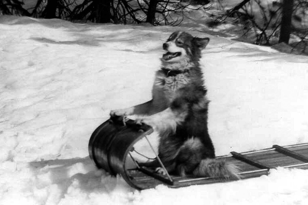 1956-Husky-2.jpg