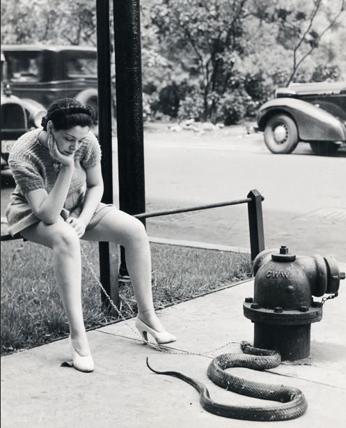 44 Burlesque dancer Zorita walks her pet snake, 1937.JPG