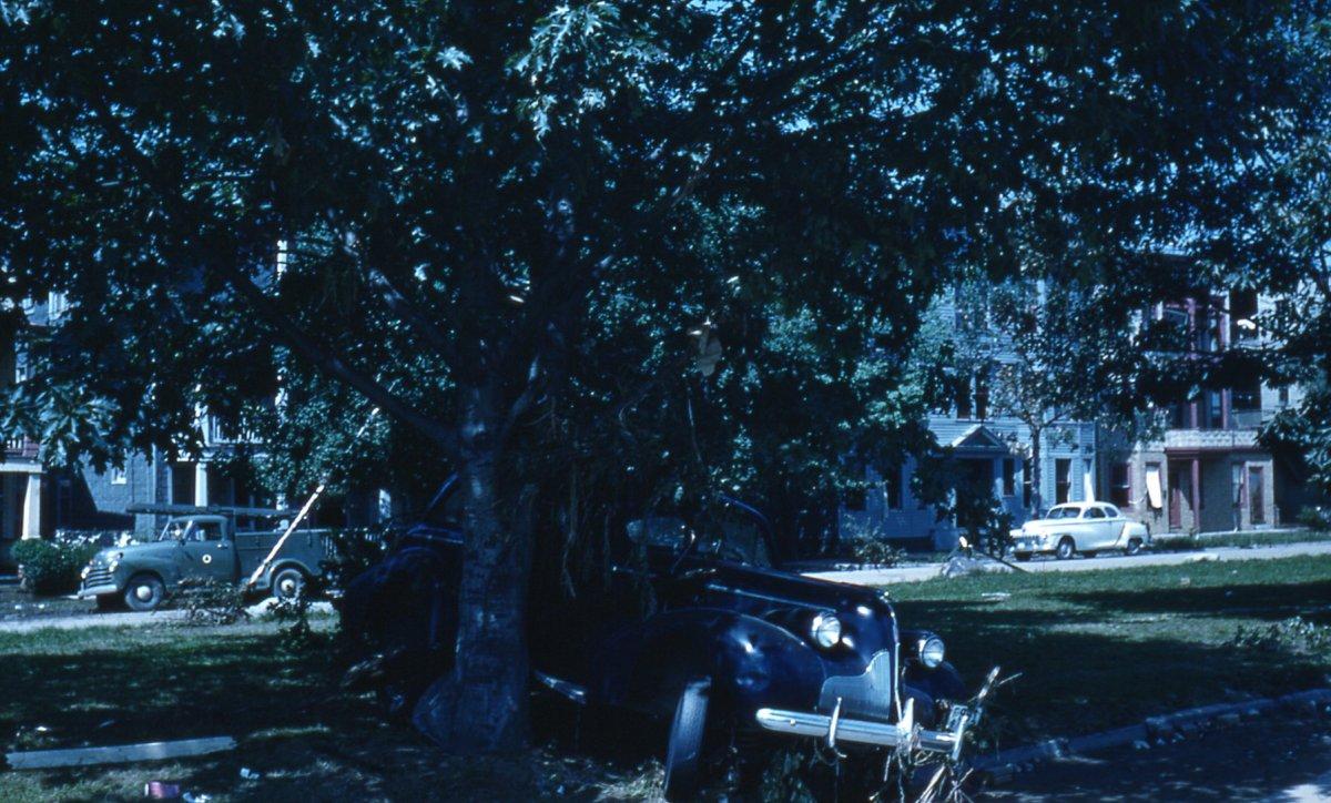 55flood car in tree.jpg