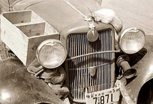 85Front of fruit peddler's car, Texas, 1939.JPG