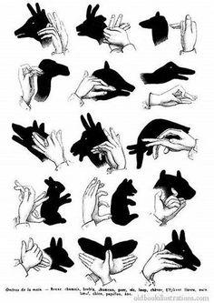 91cd4a2f1fb2b66e466195979b3c8cc8--hand-shadow-puppets-hand-puppets.jpg