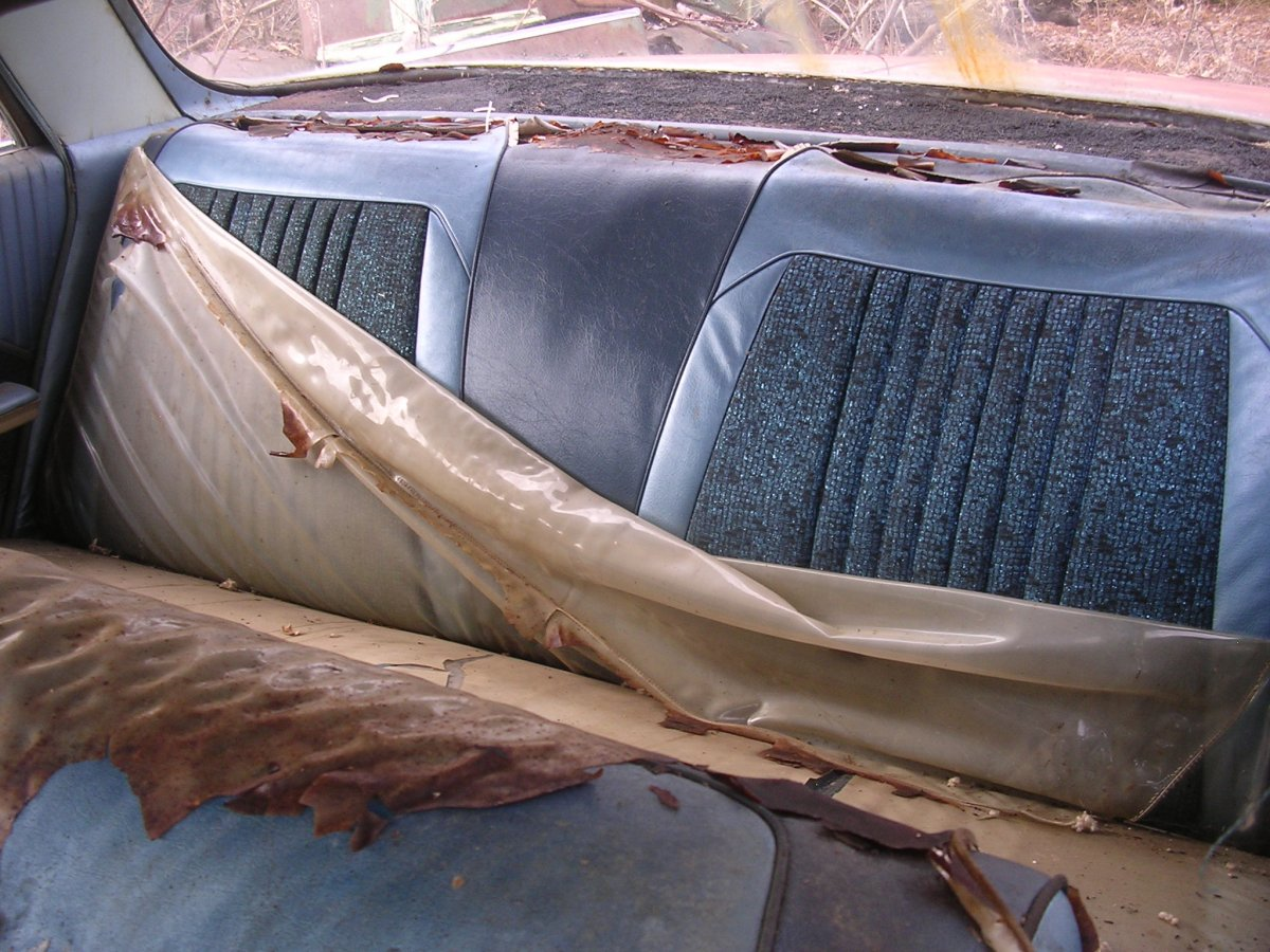 ____ 64 olds backseat.jpg