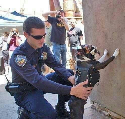 anarchy,biker,cop,culture,dog,funny-12e93fa3f4fe952b1e00b77b9ae4afb7_h.jpg