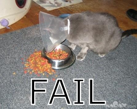 Cat_FAIL.jpg
