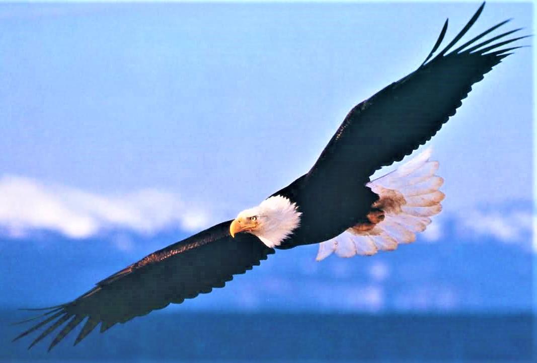 eagle-2 (3).jpg