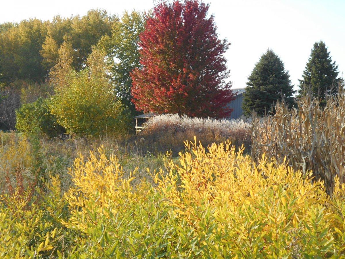 fall color 10-20 011.jpg