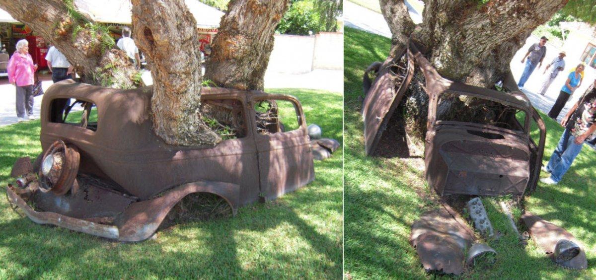 Ford-in-tree.jpg
