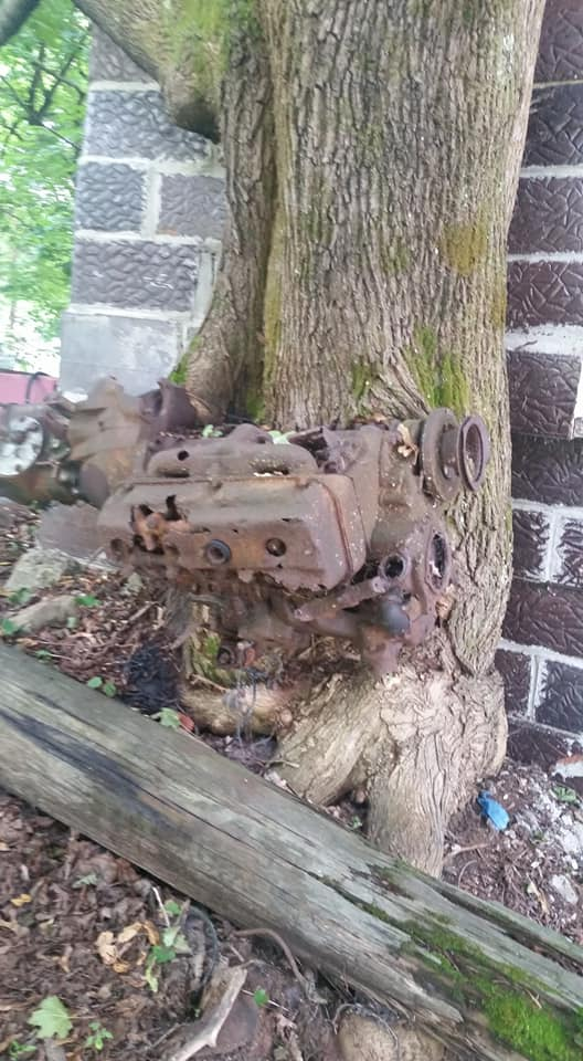 HEMI V8 in tree (2).jpg