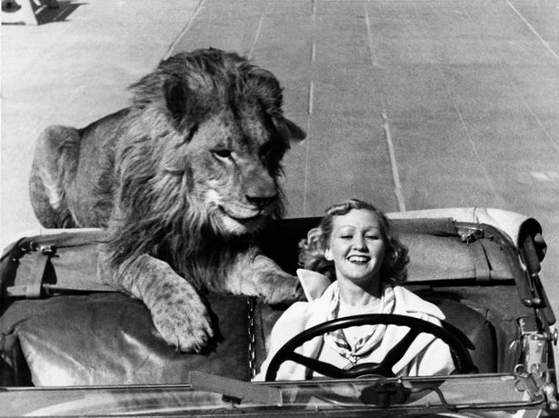 Lion-in-a-car.jpg