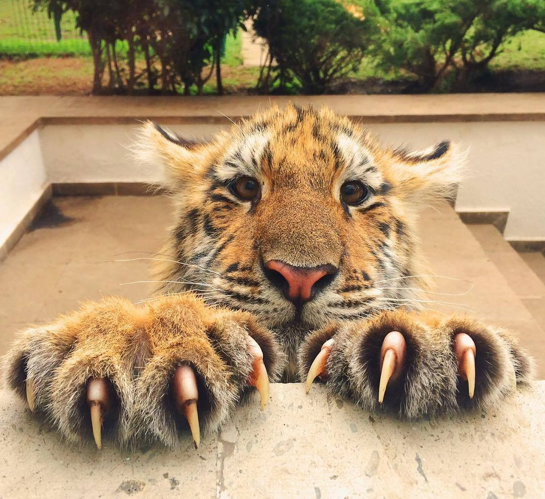 meow-big.jpg