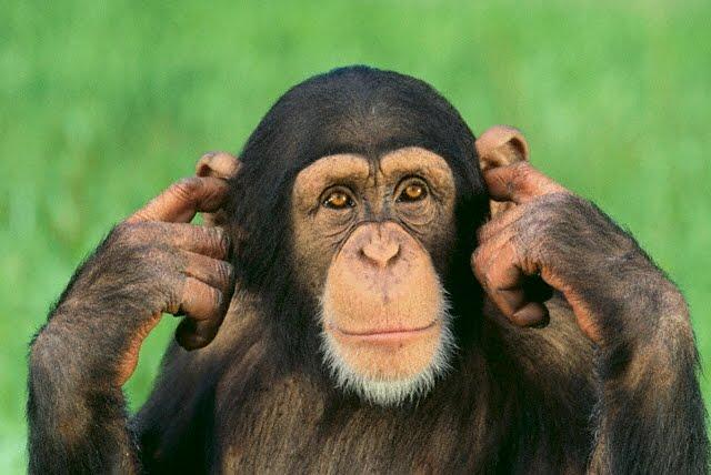 monkey-ear.jpg