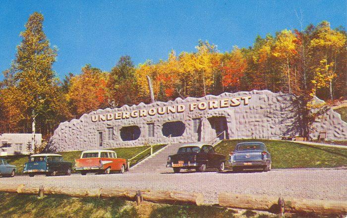 Otsego-Frederic-Roadside-Underground-Forest-1950s-700x440.jpg