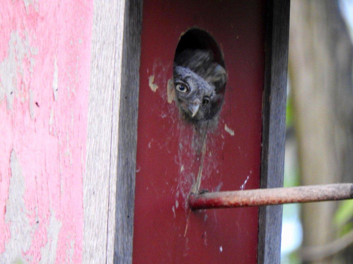 Owl house 2.jpg