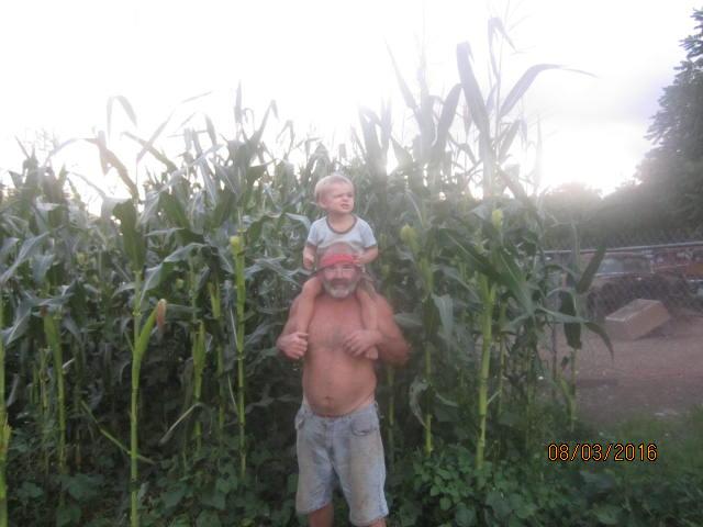 pawpaw's corn 006.JPG