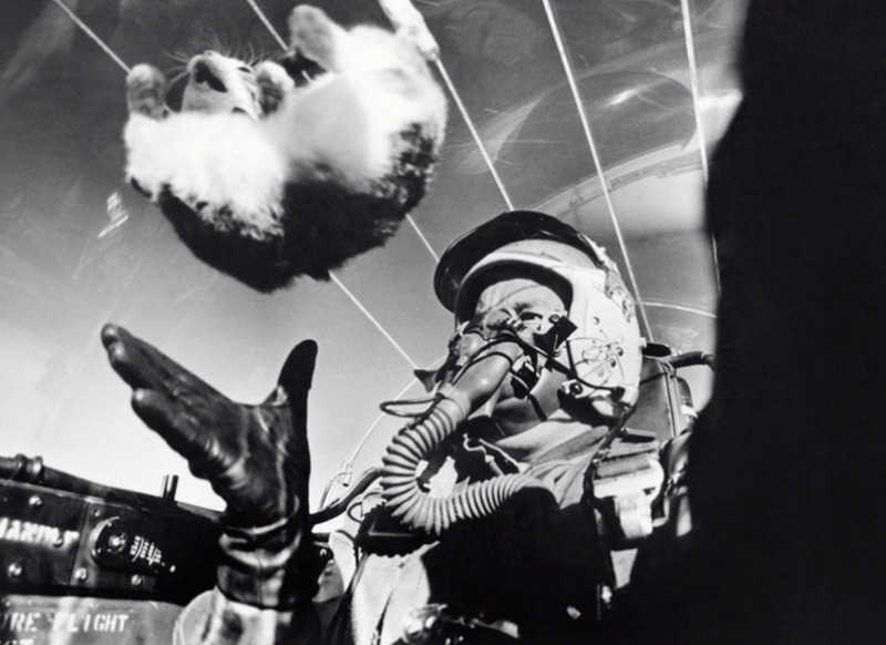 planes zero g kitty not sure what it proved.jpg