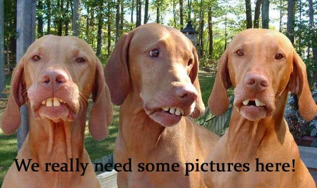 redneckdogswcaption.jpg