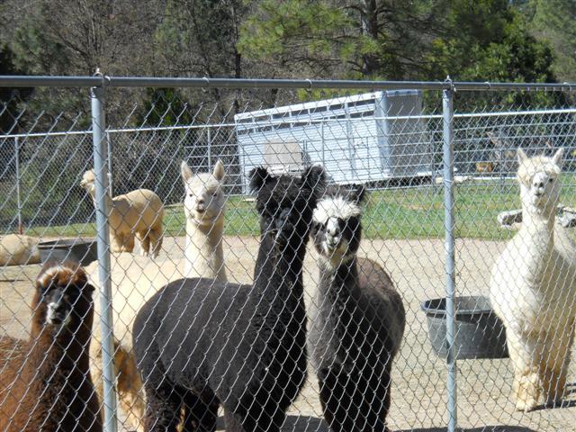 Shop Tour - Grass Valley March 2012 019 (Small).jpg