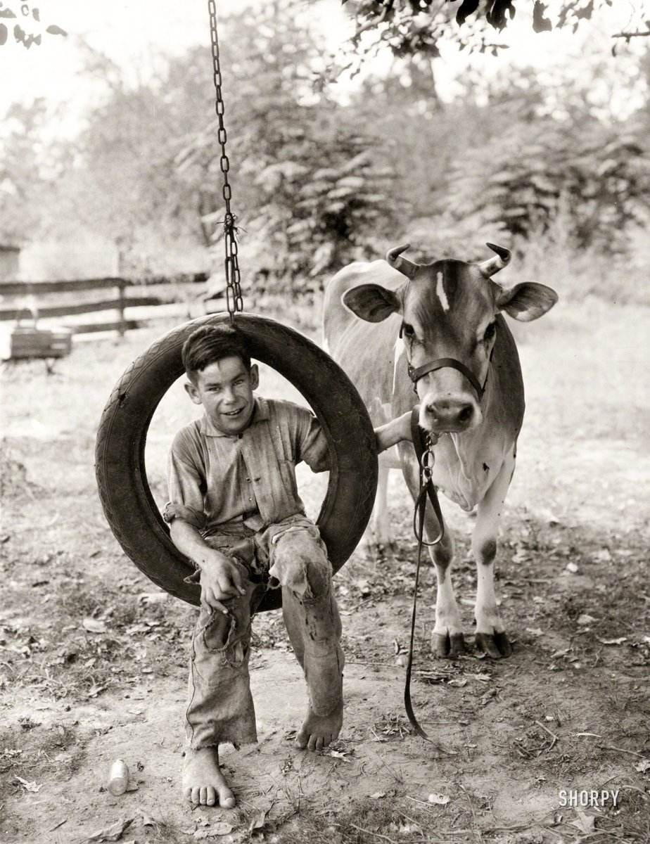 SHORPY-Circa 1930. Boy in tire swing holding cow on a tether note the toe on that boy.jpg