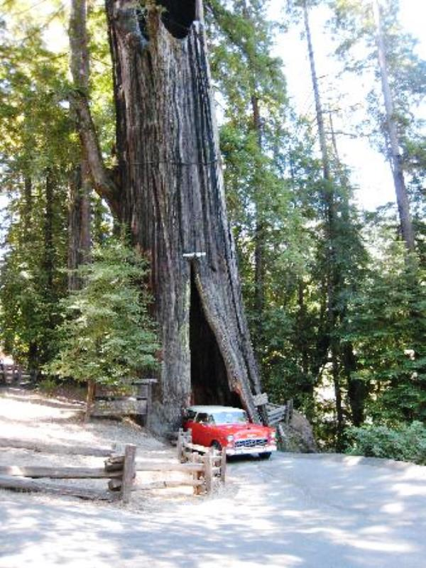 shrine tree.jpg