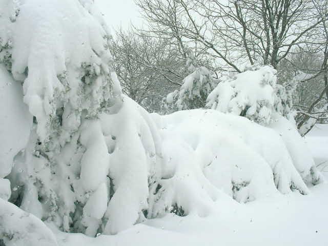 snowbound 011.jpg