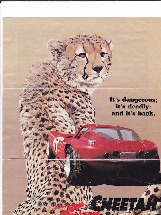 sport cheetah (2).jpg