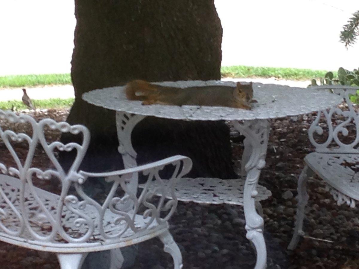 squirrel (2).jpg