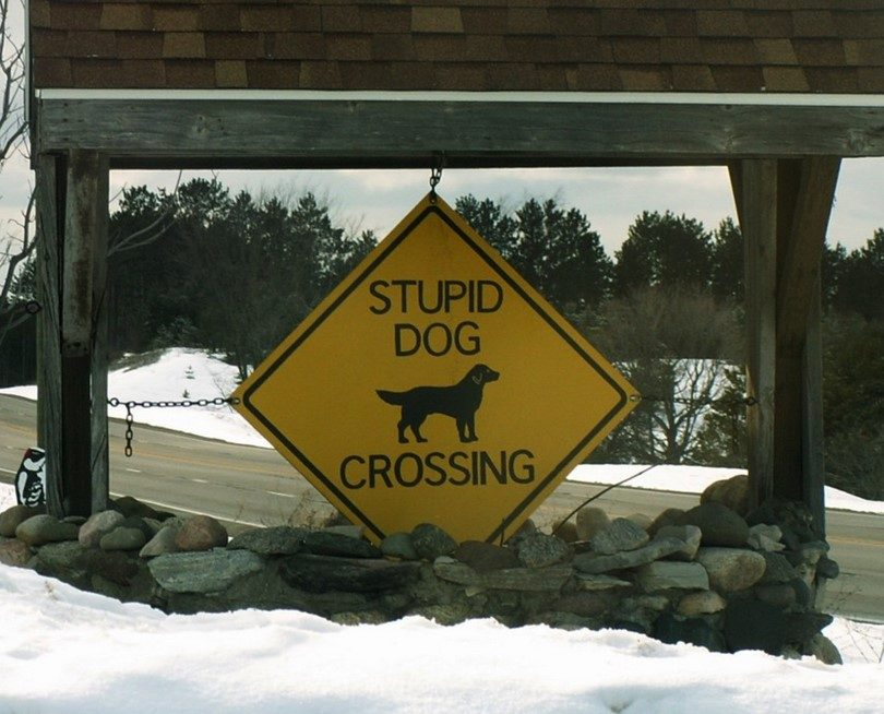 Stupid-dog-crossing-sign.jpg