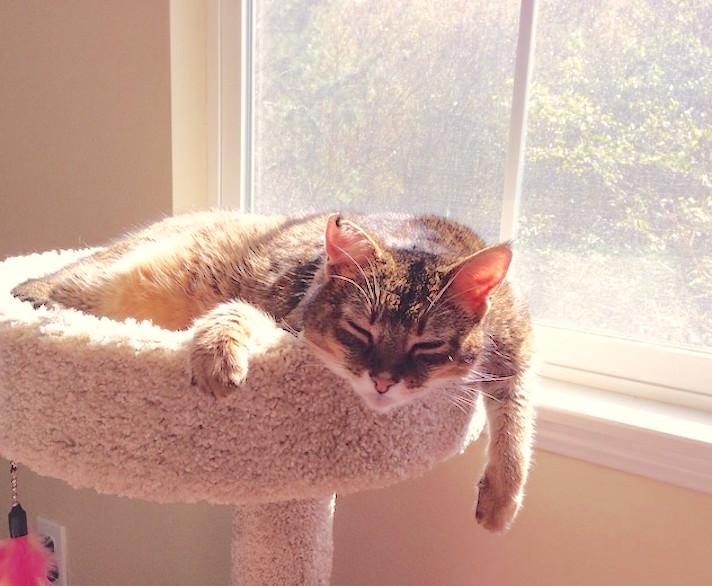 sunbathchausie.jpg