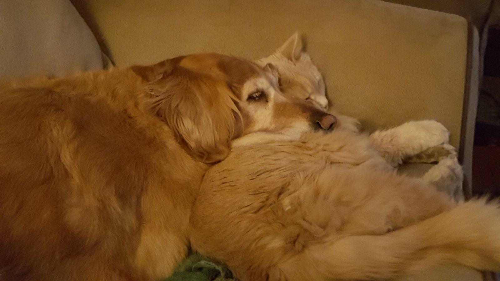 Suzzies pillow.jpg