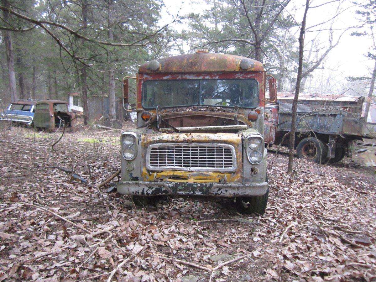 trees bulldozer 015.JPG