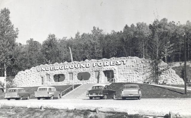 Underground Forest Frederick Michigan.jpg