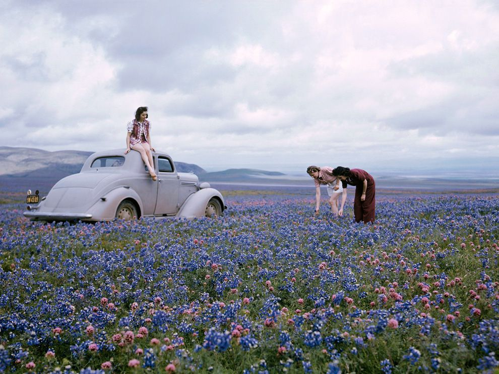 wildflowers-california-stewart_62545_990x742.jpg